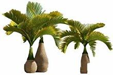 KINGDUO 20 Pcs Bouteille Palm Graines Bonsai