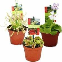 Kit de démarrage Plantes carnivores - 3 Plantes