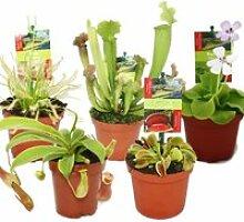 Kit de démarrage Plantes carnivores - 5 plantes