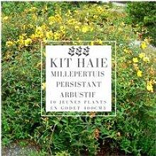 Kit Haie Basse Millepertuis Persistant Arbustif
