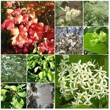 Kit Haie Brise-Vent - 20 Jeunes Plants