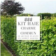 Kit Haie Charme (Carpinus Betulus) - Haie en Kit -