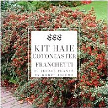 Kit Haie Cotoneaster (Cotoneaster Franchetti) -
