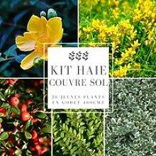 Kit Haie Couvre Sol - 20 Jeunes Plants 20 jeunes