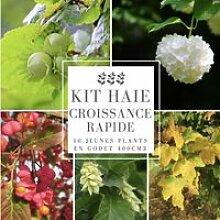Kit Haie Croissance Rapide - 10 Jeunes Plants 10