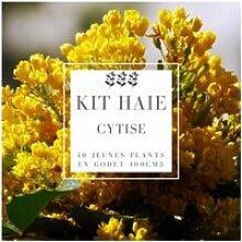 Kit Haie Cytise (Laburnum Anagyroides) - Haie en