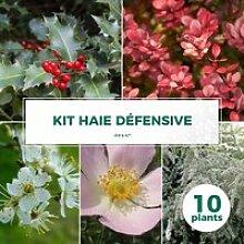 Kit Haie Défensive - 10 Jeunes Plants 10 jeunes