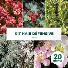 Kit Haie Défensive - 20 Jeunes Plants 20 jeunes