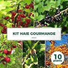 Kit Haie Gourmande - 10  Jeunes Plants 10 jeunes