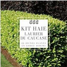 Kit Haie Laurier Du Caucase (Prunus Laurocerasus