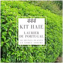 Kit Haie Laurier Du Portugal (Prunus Lusitanica) -