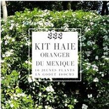 Kit Haie Oranger Du Mexique (Choisya Ternata) -