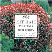 Kit Haie Photinia (Photinia Fraseri 'Red
