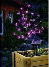 Lampe décorative solaire Arbuste 102104 LED 0.6 W