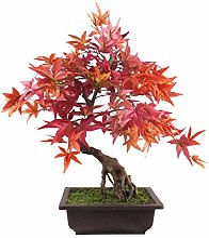 Leaf Arbre Artificiel bonsaï érable Rouge 60cm