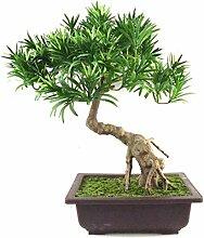 Leaf Arbre Artificiel Podocarpus bonsaï 40cm