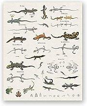 Lézard Table Imprime Reptiles Histoire Naturelle