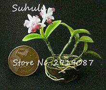 Livraison gratuite 50 Pcs Mini Bonsai Orchid