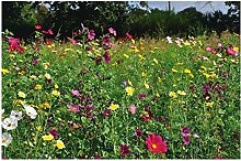 Lot 50 graines Bio Fleurs Sauvages Mélange -