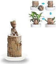 Mini chanceux brésil plante en bois hydroponique