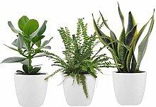 Mix 3 plantes pour chambre à coucher avec