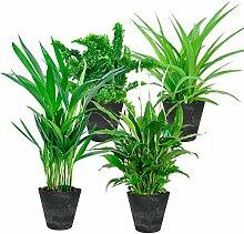 Mix 4 plantes avec pots décoratifs   Plantes