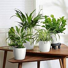 Mix 4 plantes avec pots décoratifs | Plantes