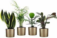 Mix 4 plantes faciles d'entretien avec