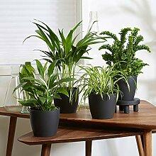 Mix 4 plantes purificatrices d'air avec