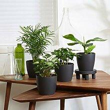 Mix Fresh   4 plantes vertes d'intérieur