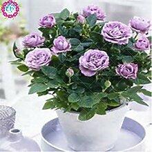 mix SwansGreen: 100pcs/sac rose arbre, rose
