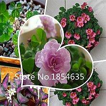 Multicolore: Jardin Plante 200 Pcs En Gros 100%