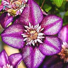 Multicolore: Vente chaude 100 Pcs/Lot Belle