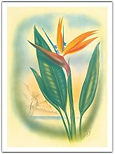 Oiseau De Paradis Hawaii de Ted Mundorff c.1940s -