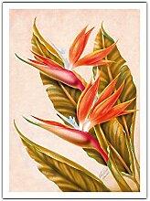 Oiseau De Paradis, Hawaii de Ted Mundorff c.1940s