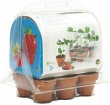 OXYBUL EXPLOR Serre 6 pots fraises à faire