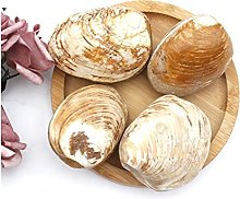 Pierre 1 kg Shell Natural Clam Shell Speciment