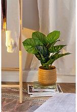 Plante artificielle décorative Calatea ↑50 cm