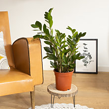 Plante d'intérieur facile d'entretien