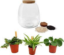 Plante d'intérieur - Terrarium de 3 plantes