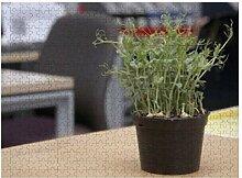 Plantes en pot sur un bureau en bois - 500 puzzles