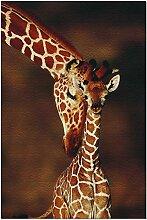 Puzzle 500 pièces girafe et bébé pour adultes