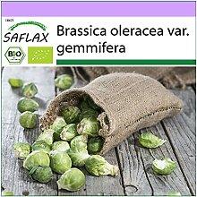 SAFLAX - BIO - Chou de Bruxelles - Groninger - 30