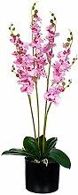Sarahb XL Orchidée en Pot jwp361riesige