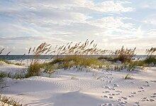 Scenolia Tapisserie Toile Textile Plage et Dune de