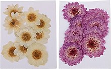 SDENSHI 20 Pcs Pressé Herbier de Fleurs Séchées