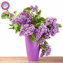 semences arbre de papillon plante en pot lilas