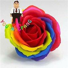 Shopvise exotiques Rainbow Rose Graines rares