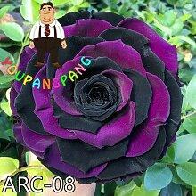 Shopvise exotiques Rainbow Rose Seeds Rare