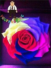 Shopvise Graines exotiques Rainbow Rose Rare